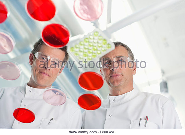 Scientists examining petri dishes in lab - Stock Image