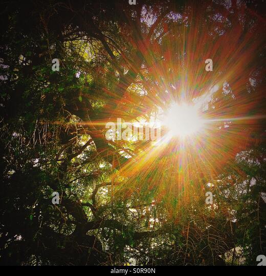 Splintered sunlight breaking through the trees - Stock Image