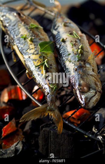 grilled mackerel (topic: Provence) - Stock Image