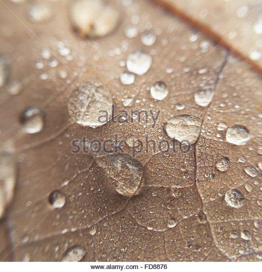 Full Frame Shot Of Wet Dry Leaf - Stock-Bilder