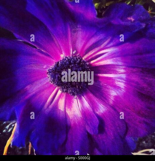 Purple flower - Stock Image