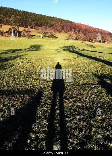 Long shadow with a field and wood in the background in England in winter. - Stock Image