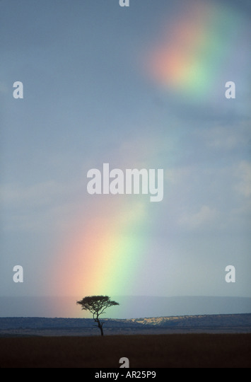 Africa Kenya Masai Mara Game Reserve Rainbow forms amid rain clouds above lone acacia tree on savanna at sunset - Stock-Bilder