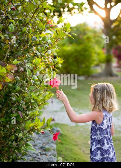 girl reaches for flower - Stock Image