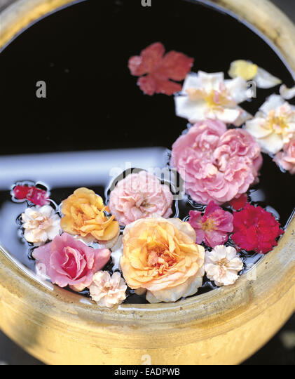 various roses in ceramic barrel - Stock Image