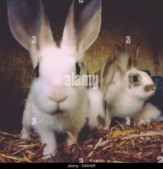 Young rabbits - Stock Image