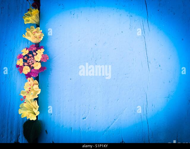 Flower flat lay , backdrop - Stock Image