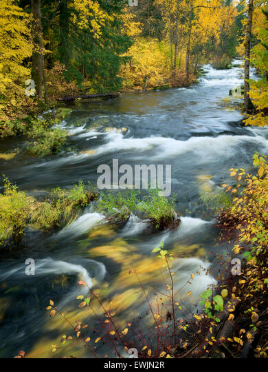 Trout Lake Creek in fall color. Washington - Stock Image