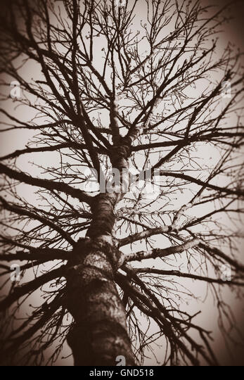 Tree with bare branches and sky. Moody and dark forest scene. - Stock-Bilder