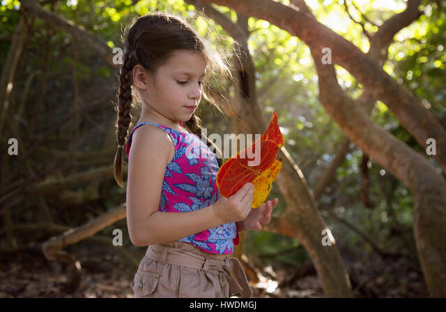 Girl collecting seagrape (coccoloba uvifera) leaves, Blowing Rocks Preserve, Jupiter, Florida, USA - Stock-Bilder