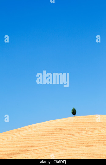 Tuscany - Single tree on hillside near Pienza - Stock Image