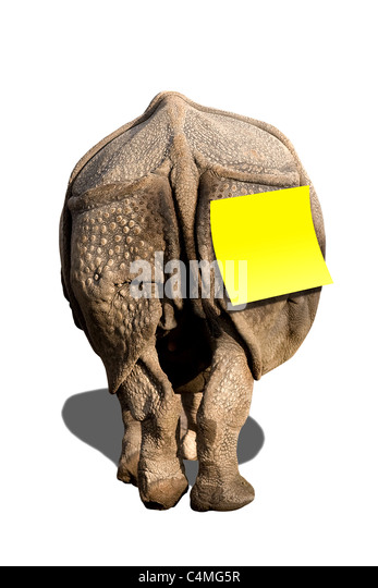 Rhino with Notice Sticker Tag Isolated - Stock Image