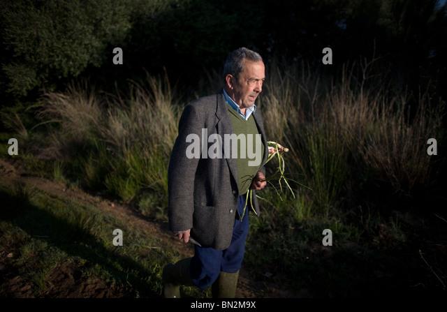 Retiree Antonio Sanchez Lozano picks wild asparagus in Prado del Rey, Cadiz province, Andalusia, Spain - Stock Image