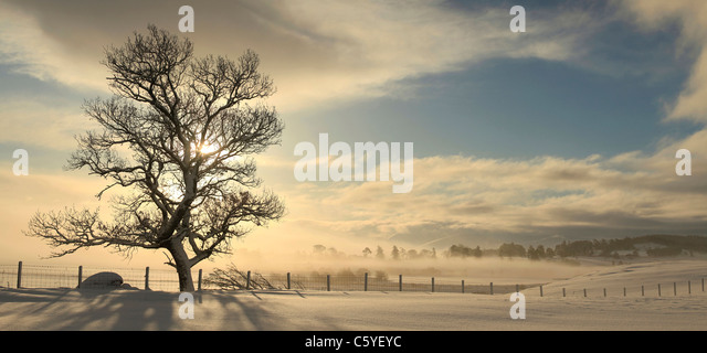 Tree silhouetted on winters sunrise, Strathspey, Cairngorms National Park, Scotland, Great Britain. - Stock-Bilder