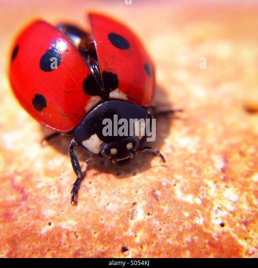 Ladybird - Stock-Bilder
