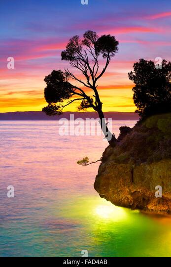 Alone single tree on the Brela beach at sunset, Makarska Riviera landscape, Croatia, - Stock Image
