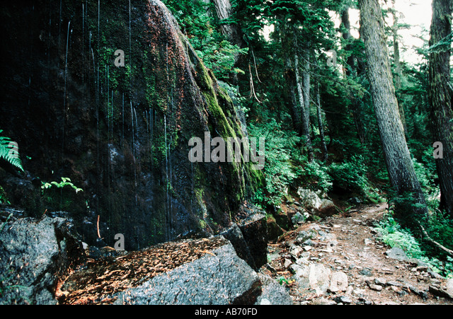Water streams from moss covered rock along Cascade Pass trail North Cascades National Park COPYRIGHT DUANE BURLESON - Stock Image