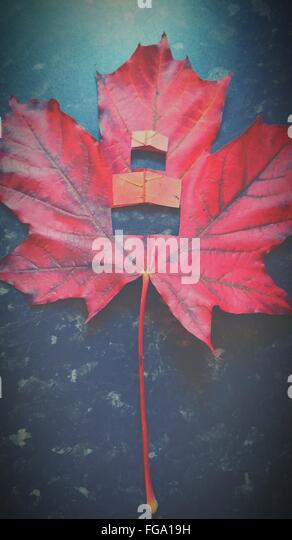 High Angle View Of Red Autumn Maple Leaf - Stock Image