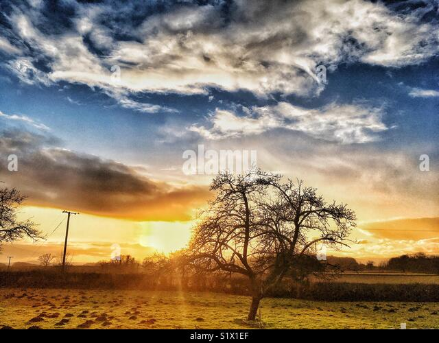 Winter sun - Stock Image
