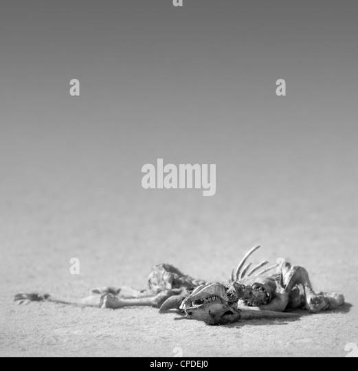 Eland skeleton in the desert (Artistic processing) - Stock Image