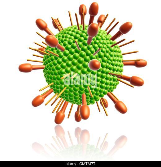 Paramyxovirus particle, illustration. - Stock Image