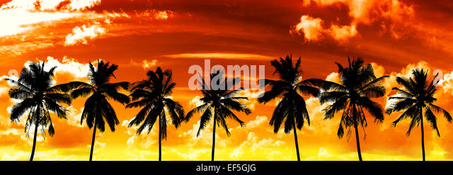 Black palms silhouettes on sunset sky. - Stock Image