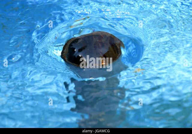 Baggersee stock photos baggersee stock images alamy for Swimmingpool im angebot