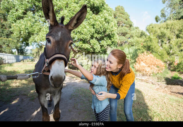 Student and teacher petting donkey at zoo - Stock Image