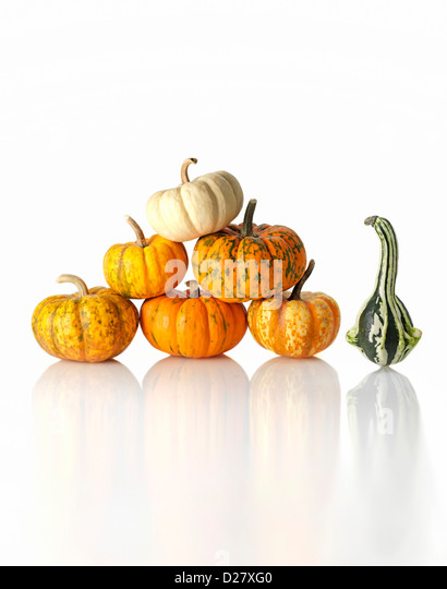 One Gourd Next to Stack of Small Pumpkins on White Background - Stock Image