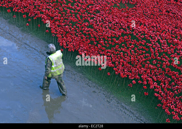 Volunteer next to Blood Swept Lands and Seas of Red poppies, at The Tower of London, England UK - Stock Image