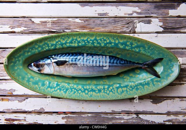 Close up of mackerel on plate - Stock Image