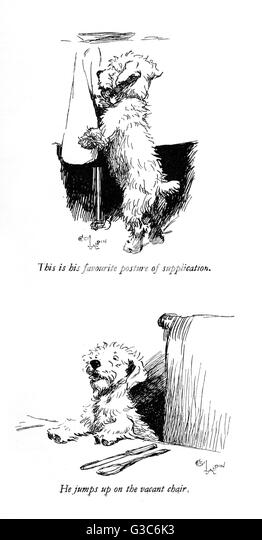 Illustrations of a Sealyham terrier called Bunch, by Cecil Aldin. Seen here on his hind legs near the dinner table - Stock-Bilder
