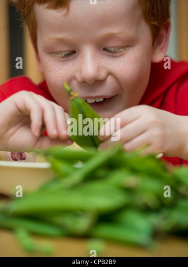 Child shelling peas on a kitchen table - Stock Image
