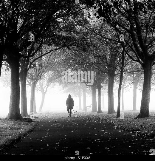Walking the dog through the park in the fog. - Stock Image