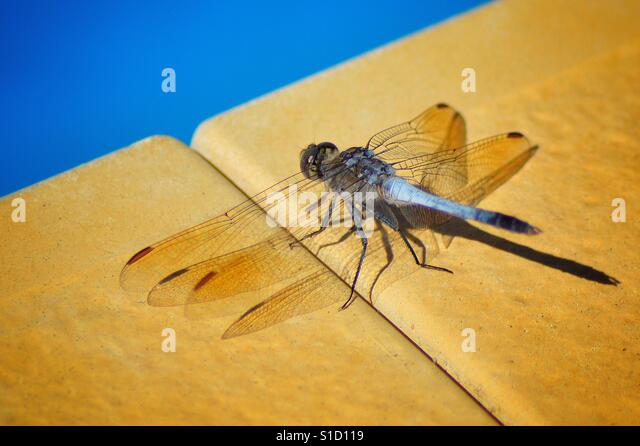 Dragonfly sunbathing - Stock-Bilder