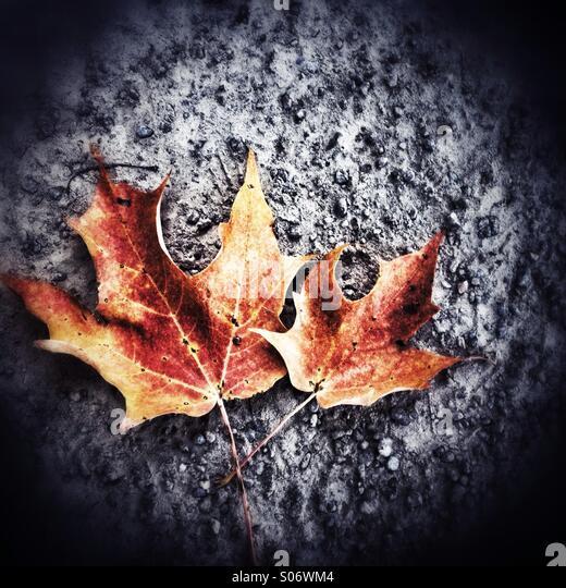 Autumn leaves - Stock-Bilder