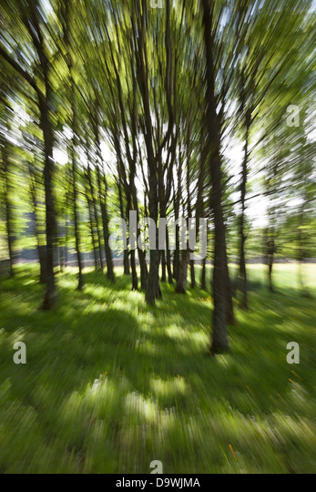 Zoom Abstract of Woodland Trees in Summer - Stock Image