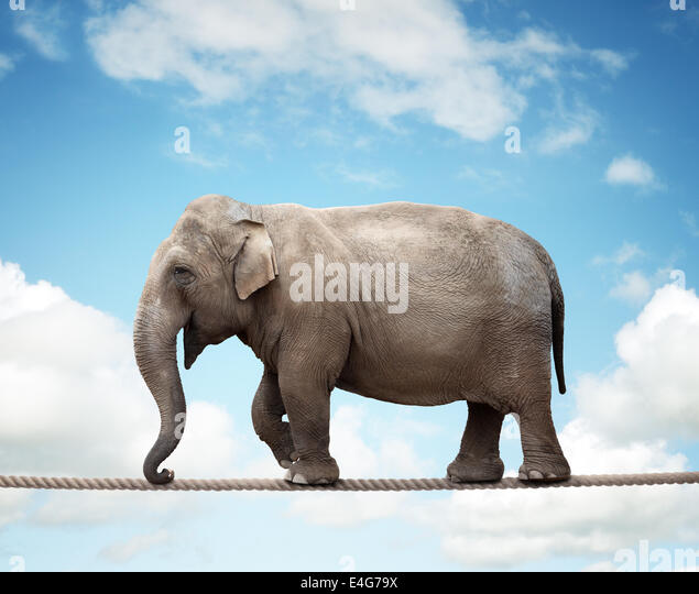 Elephant on tightrope - Stock Image