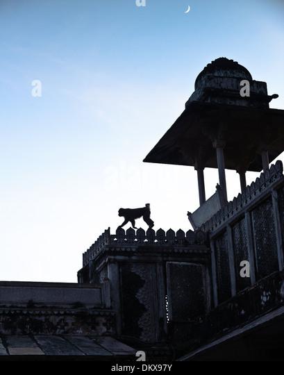Monkey at moonrise, Bundi Palace, India Rajasthan - Stock-Bilder