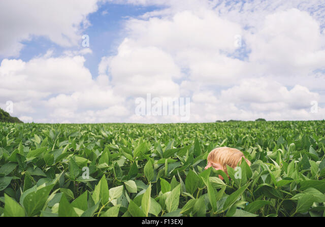 Boy's head in a corn field - Stock-Bilder