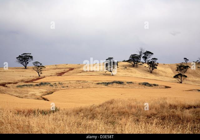 Wheatbelt Western Australia - Stock Image