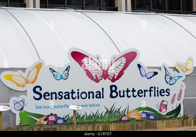 Sensational Butterflies sign at exhibition, Natural History Museum, London in April - Stock Image