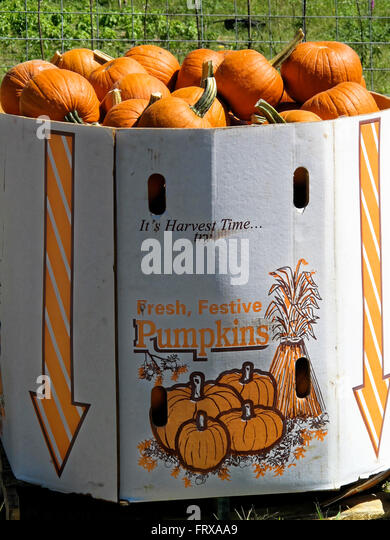 giant-cardboard-box-of-pumpkins-by-a-fen