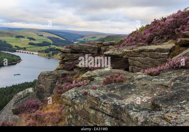 Bamford Edge with heather above Ladybower and Ashopton Bridge at dawn, Peak District, Derbyshire, England, United - Stock Image
