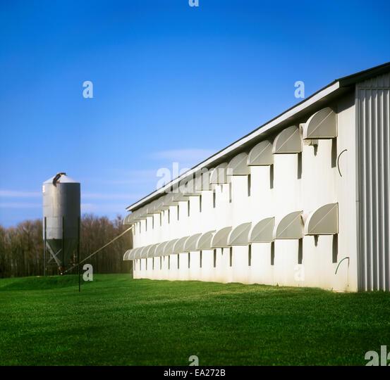 Broiler Farm Stock Photos & Broiler Farm Stock Images