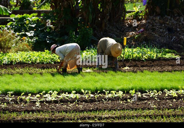 Garden vegetable protection stock photos garden for Gardening tools mauritius