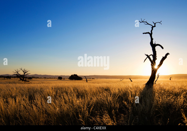 Scenery showing the unique ecology of the south-west Namib desert or pro -Namib. NamibRand Nature Reserve, Namibia - Stock Image