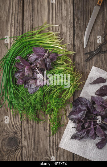 Garden fresh herbs basil, dill on the wooden table vertical - Stock Image
