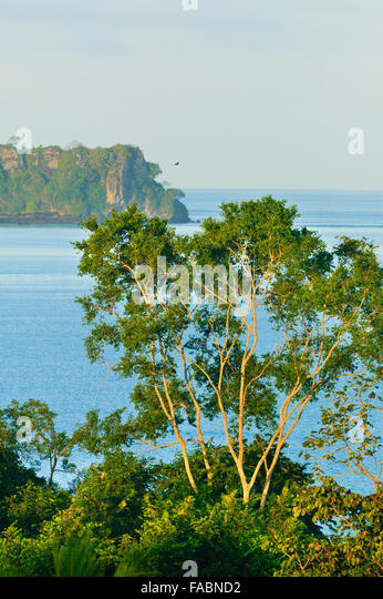 Coastal rain forest at Punta Patino nature reserve, Pacific coast, Darien province, Republic of Panama. - Stock-Bilder