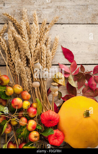 autumn gatherings of wheat ears, crabapples, chinese lanterns, poppy seedheads, virginia creeper leaves - Stock Image